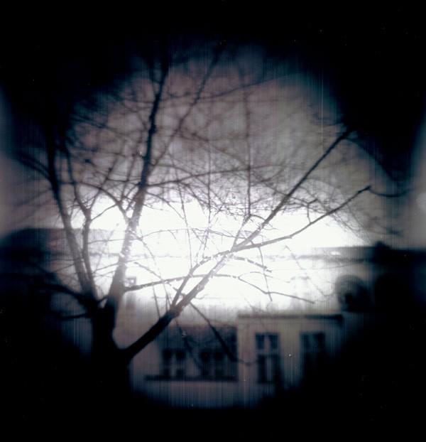 http://www.dylanbakker.com/files/gimgs/th-72_tree-copy.jpg