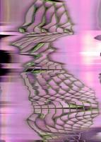 https://www.dylanbakker.com/files/gimgs/th-73_purple-squares.jpg